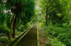 Steps on Mount Emei Stock Photo
