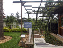 Steps at National Memorial to the victims of Genocide, Kigali, R. Kigali, Rwanda - March 2, 2017 : Steps to mass graves in National Memorial to the victims of Stock Images