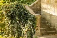 Steps of the old castle with green vegetation. Steps of the old castle, pouring vegetation, sunset. Old Park Garden royalty free stock image