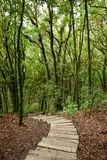 Steps ot wooden stair in the forest Royalty Free Stock Images