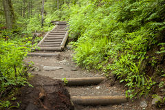 Steps on a path in woods. Steps on a path leading to Franklin Falls in Washington Stock Photography