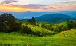 Steps rice field on sunset Stock Photo