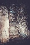 Steps in rocks and tree In retro style Stock Photography
