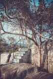 Steps in the rocks and tree In retro style Royalty Free Stock Photo