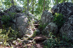 Steps through a rocky pass in a forest Royalty Free Stock Photo
