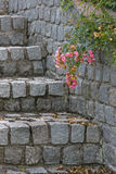 Steps and roses Royalty Free Stock Photo
