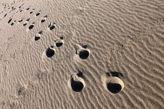 Steps on the sand of the Adriatic sea shore, Velika Plaza - Great Beach (Montenegro, winter) Stock Image