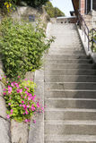 Steps side of flowers. Steps side of bright pink jointed woodsorrel flowers Stock Photography
