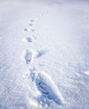 Steps on snow. Footsteps on the snow made by human Stock Images