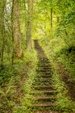 Steps or stairs leading through the forest. stock photography