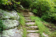 Steps to help climb up and into a lush forest stock photo
