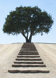 Steps to Serene Tree. Photographic image of steps up a hillside leading to an isolated, serene tree. Use to express many emotions or progress towards a goal Royalty Free Stock Photo