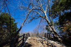 Steps and the trees in blue sky day. Stock Images