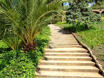 Steps in tropical garden. Royalty Free Stock Photo