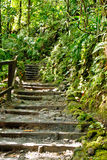 Steps up Walking Trail in Rain Forest Royalty Free Stock Photos