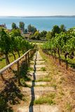 Steps with wooden railing downwards a vineyard with view of at the lake constance stock images