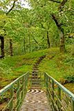 Steps into the woods. Steps leading into the woods in Wales, UK Royalty Free Stock Image