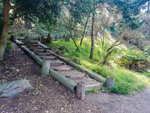 Steps in the woods Stock Images