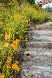Steps And Yellow Flowers Royalty Free Stock Images