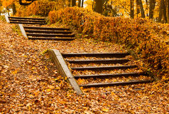 Steps in yellow leaves in autumn Royalty Free Stock Photo