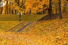 Steps in yellow leaves in autumn Stock Photography