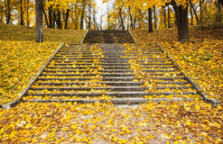 Steps in yellow leaves in autumn Royalty Free Stock Images