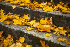 Steps in yellow leaves in autumn Stock Photo
