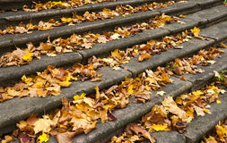 Steps in yellow leaves in autumn Royalty Free Stock Photography