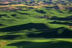 Steptoe Butte. Rolling Green Wheat Fields located in the Palouse Royalty Free Stock Photo