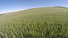 Steptoe Butte and a farmers crops in Washington State stock footage