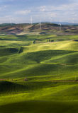 Steptoe Butte Wind Turbines Royalty Free Stock Photography