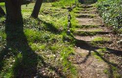 Stepway in einem Wald Stockfoto