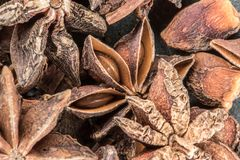 Ster Anise Seeds in Peul royalty-vrije stock fotografie