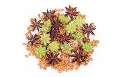 Steranijsplant Royalty-vrije Stock Foto's