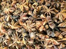 Steranijsplant of Chinese Ster-anijsplant Royalty-vrije Stock Afbeeldingen