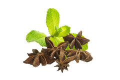 Steranijsplant en Munt stock afbeeldingen