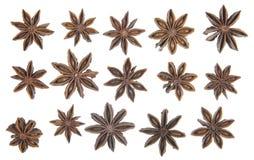 Steranijsplant op een rij Stock Afbeelding