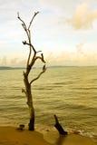 Sterben Baum auf dem Strand Stockfotografie