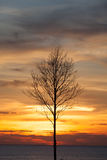 Sterben Baum im Sonnenuntergang, Sonnenaufganghintergrund Stockbild