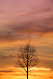 Sterben Baum im Sonnenuntergang, Sonnenaufganghintergrund Lizenzfreies Stockbild