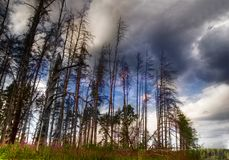 Sterbende Bäume Stockfotografie