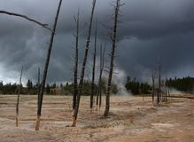 Sterbende Bäume in Yellowstone Stockfoto