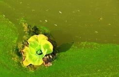 Sterbende Blume schwimmt in den Schadstofffluß Lizenzfreies Stockfoto