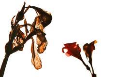 Sterbende braune Blume lizenzfreie stockbilder