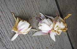 Sterbende pinkfarbene Blumen lizenzfreies stockbild