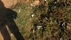 Sterbende Vegetation durch den Schatten der Menschheit Stockbild