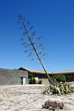 Sterbender Baum Stockfoto