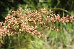 Sterbender Ontario-Wildflower Stockbild