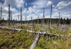 Sterbender Wald Lizenzfreie Stockfotos