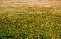 Sterbendes Gras Stockfotos